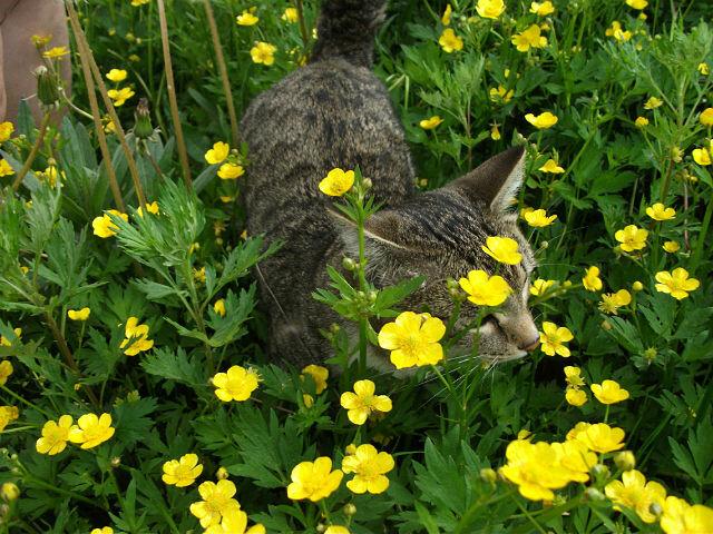 Коты и цветы.