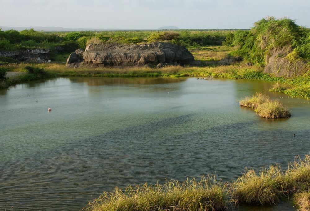 Flamingo Lagoon