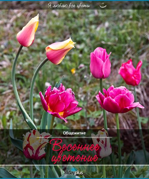 Я люблю все цветы, часть 9