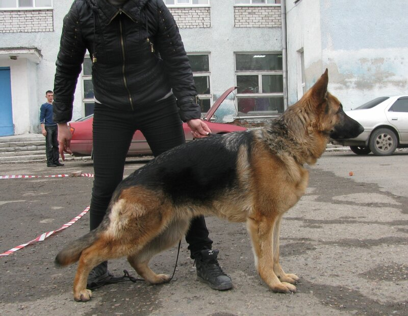 http://img-fotki.yandex.ru/get/6306/134559744.3/0_74fd4_4bde4b46_XL.jpg