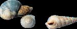ldavi-littlefishiisland-shell2.png