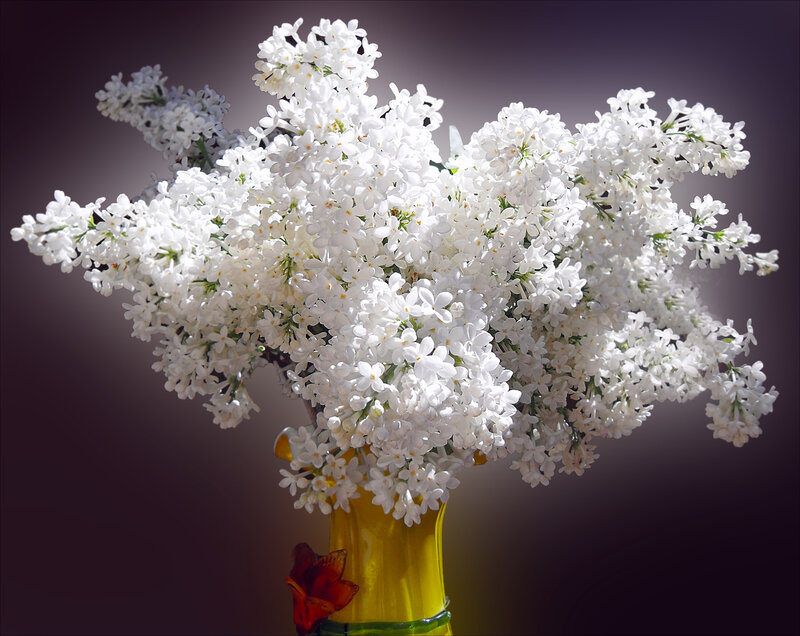 http://img-fotki.yandex.ru/get/6306/161475062.20/0_7a349_f728ccd2_XL