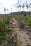 лесопосадки Шатура дуб Дьяченко.jpg