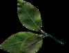 PrelestnayaP_3_kit 0_85c17_82a72228_XS