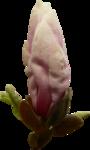 «ChinoiserieMBW» 0_85e6f_f8793ee_S