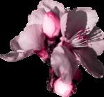«A butterfly is a flying flower»  0_86aae_39e8b93c_S