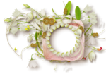 «whitebell flowers»  0_879a6_586285bf_S