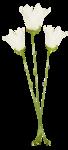 «whitebell flowers»  0_879b4_ce0c102c_S