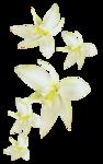 «whitebell flowers»  0_879b7_95e64afd_S