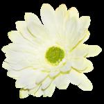 «whitebell flowers»  0_879c3_8b136791_S