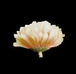 «Mystique_Designs_Flower_Bath» 0_87a17_ab41b6ac_S