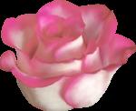 «3 скрап набора.Bee_Avarice,_Luxure,Paresse» 0_88c3c_61ed38b5_S