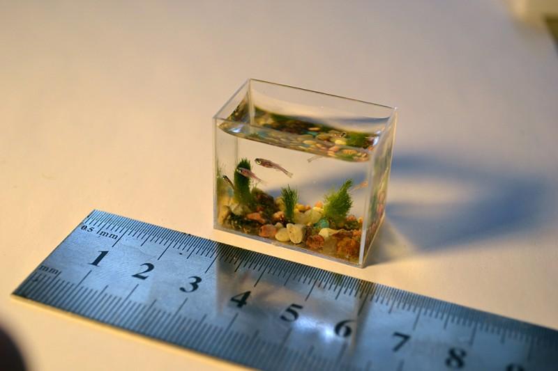 Самый маленький в мире аквариум с рыбками (7 фото)