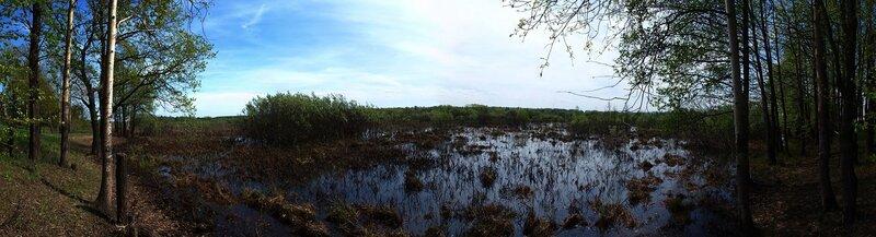 панорама болотца