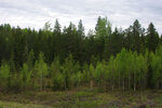 Лес у дороги в мае