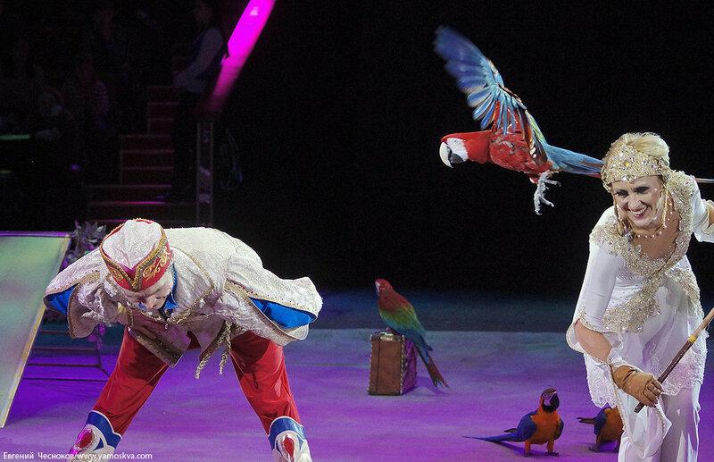 Зима. Вещий сон. 18.12.15.60.попугаи. Бриош..jpg