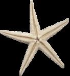 etc_dan_ssbeach_Starfish.png