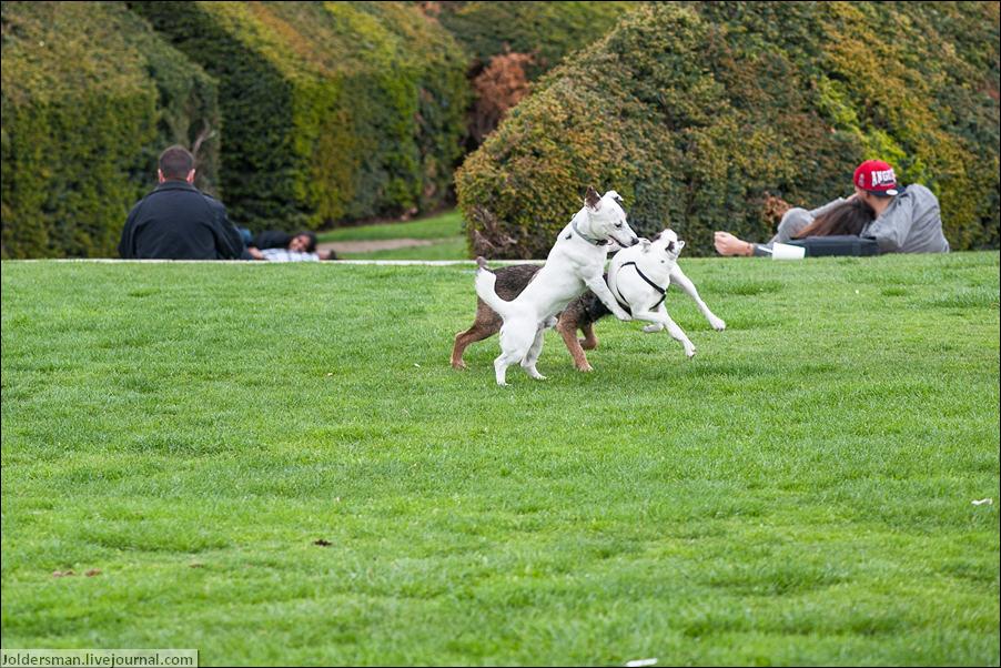 собаки в париже