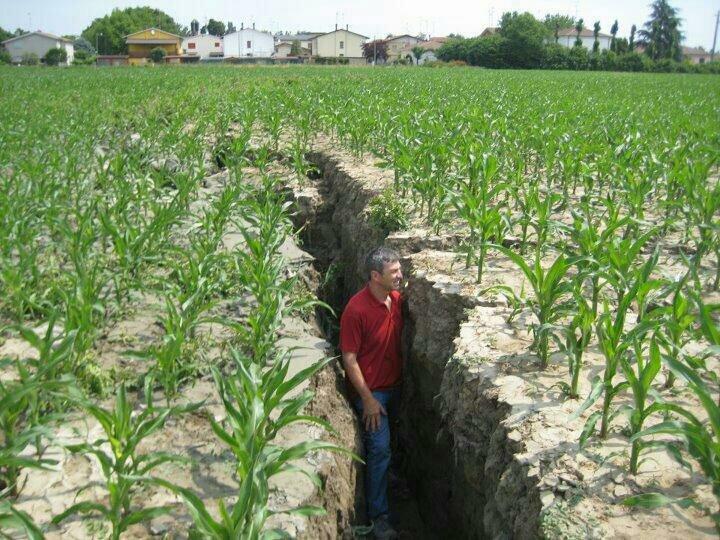 Думаете это новый способ посадки кукурузы?