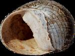 ldavi-littlefishiisland-shell8.png