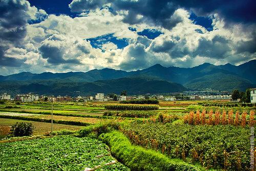 поля по дороге к озеру Эр-Хай, провинция Юньнань, Китай