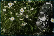 http://img-fotki.yandex.ru/get/6307/15842935.f8/0_ce7b2_9becc7e8_orig.jpg