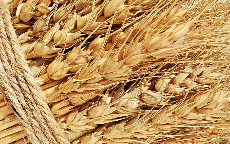 Федеральные государственные закупки Минсельхоз отложил зерновые интервенции