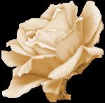 «Rose Wedding»  0_85634_d552927b_S
