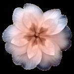 «En_ton_hommage»  0_860e8_107b42cb_S