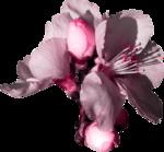 «A butterfly is a flying flower»  0_869f9_16816b30_S