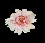 «Mystique_Designs_Flower_Bath» 0_87a12_5e91da84_S