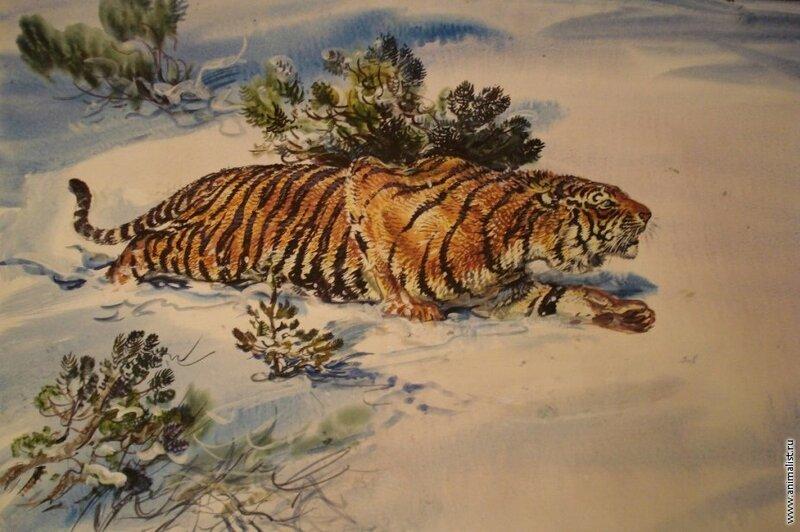 """Схема вышивки  """"В.Бастрыкин  """"Тигр на снегу."""