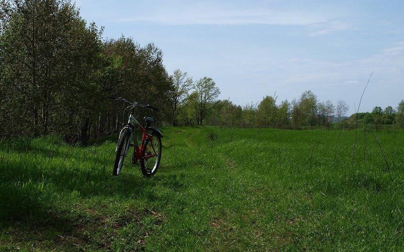 прокатный велосипед на фоне зелени