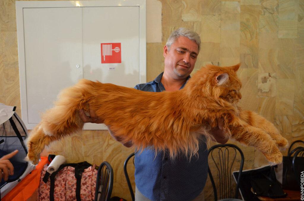 Выставка кошек в Ставрополе