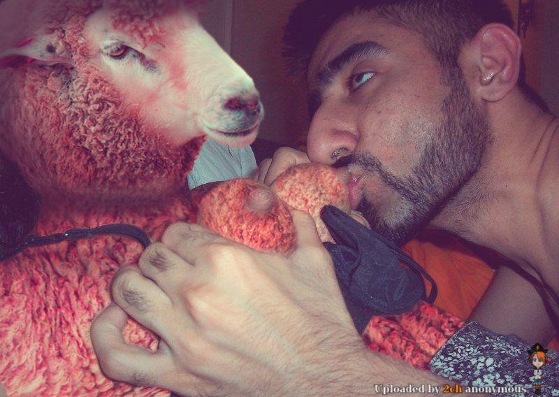 Овца Картинки и фото.