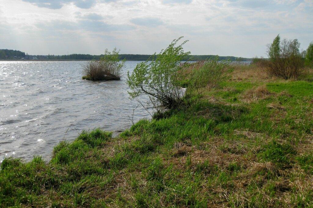 Берег Пестовского водохранилища