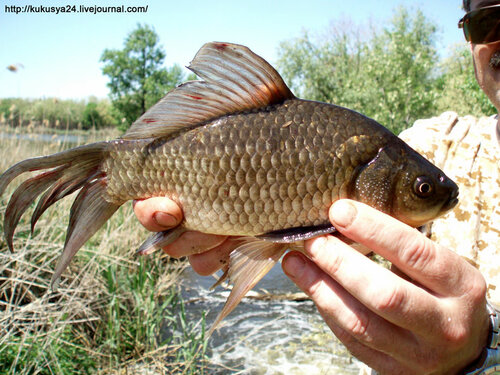 Рыбка-мутант