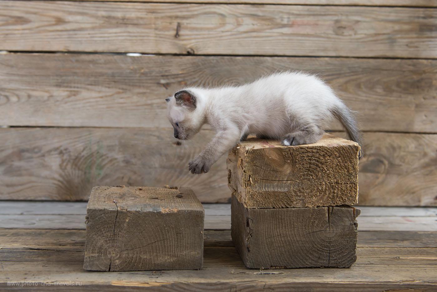 Фотография 14. Топ, топ, топает малыш... Бесплатные уроки для начинающих фотографов. Фотографируем кота в домашней фотостудии при естественном свете от окна (1000, 40, 4.5, 1/200)