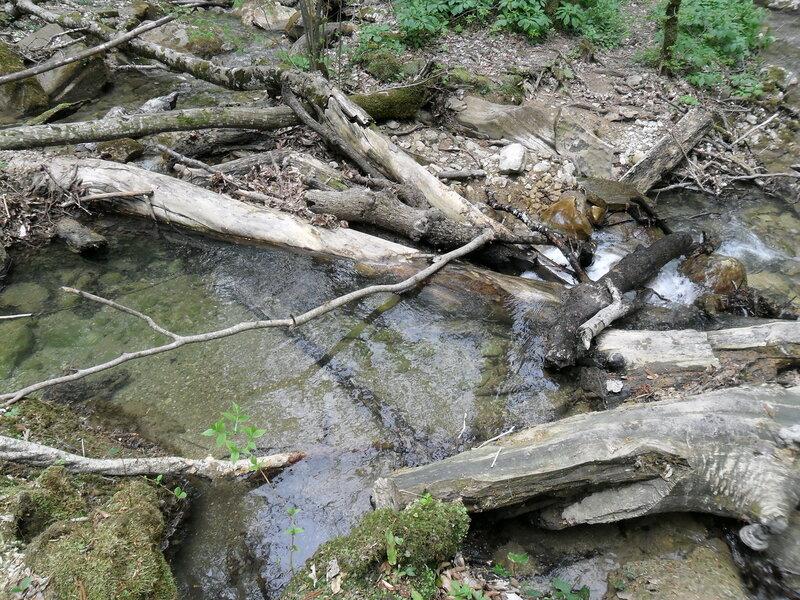Тропа у реки