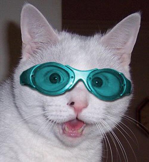 кошки в костюме