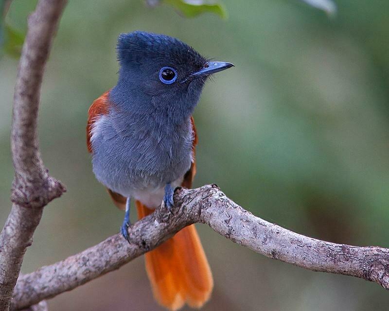 Красивые птицы - Виктория Joy
