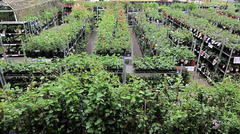Скидки до 40% на розы и саженцы в контейнерах!
