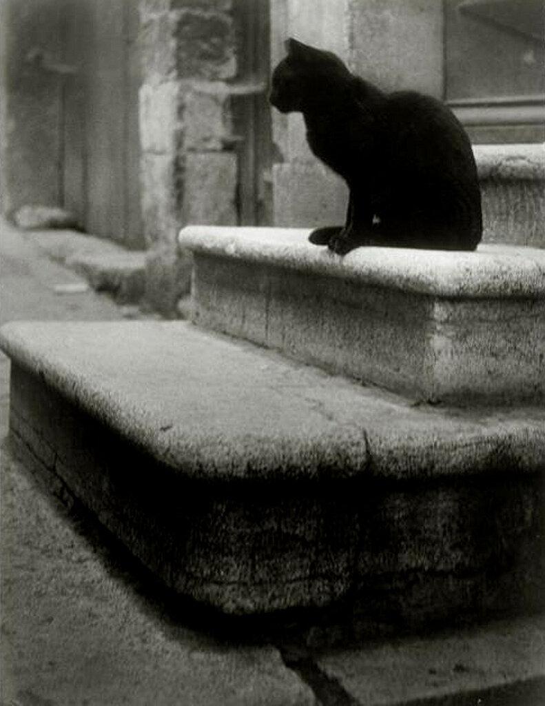 1945. Черный кот на ступеньках