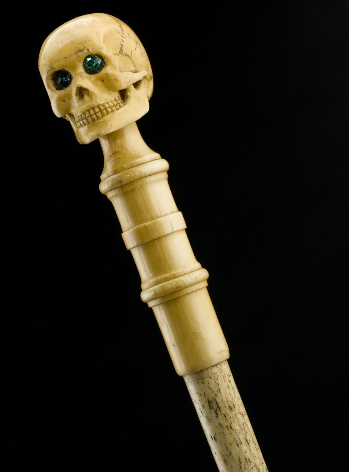 End of Charles Darwin's walking stick.jpg
