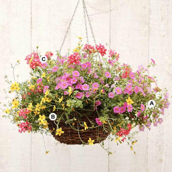 Комнатные растениЯ и цветы записи в рубрике комнатные растен.