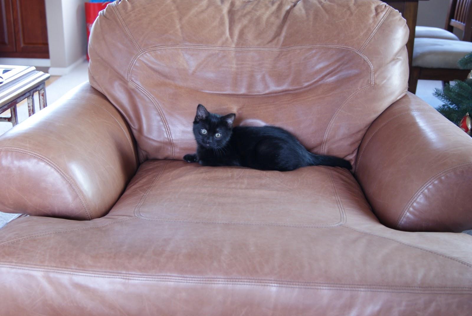 Маленький котенок в большом кресле фото 2