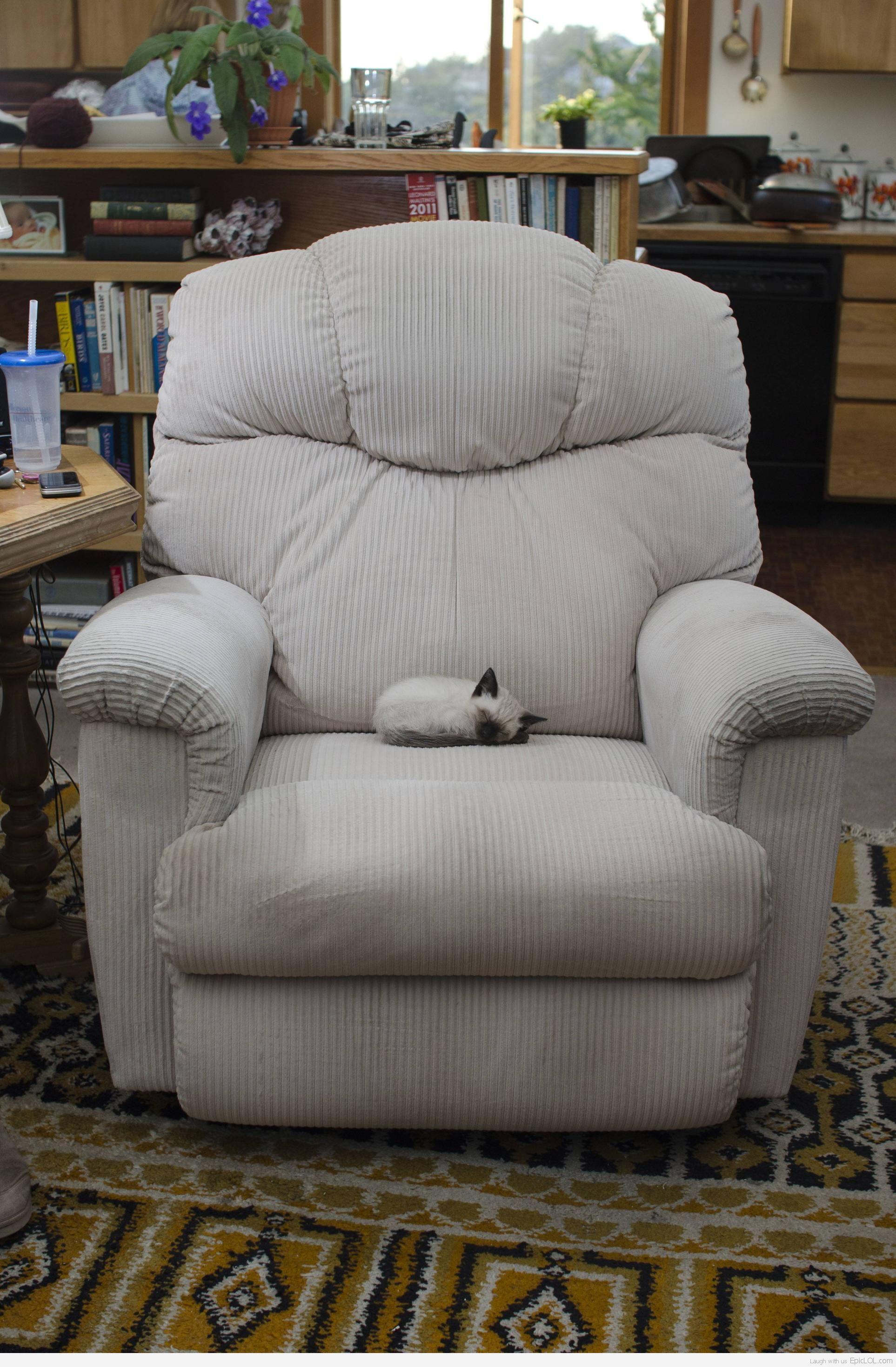 Маленький котенок в большом кресле фото 1