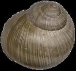 etc_dan_ssbeach_Shell4.png