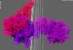 malatdehydrogenase.png