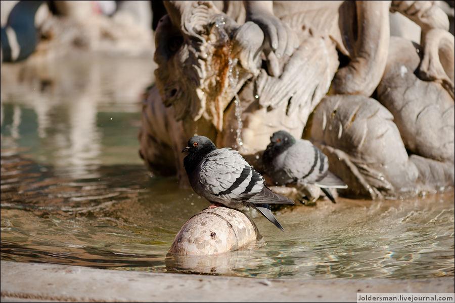 голуби в фонтане